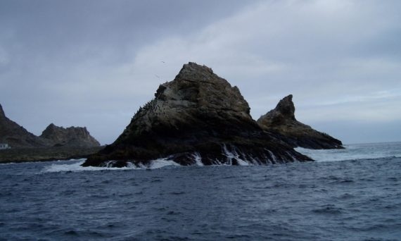 Shark Diving Farallon Islands
