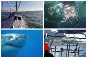 cagediver.com shark dives in San Francisco