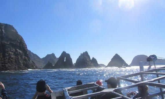 Farallones Shark Trip